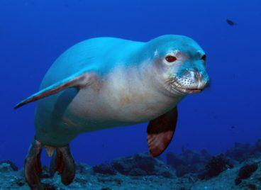 Europe's Largest Natural Marine Park
